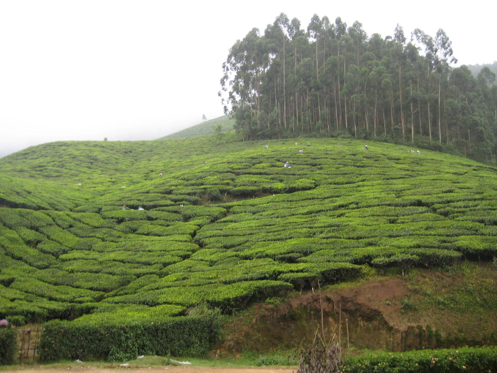 Emouvant voyage en Inde